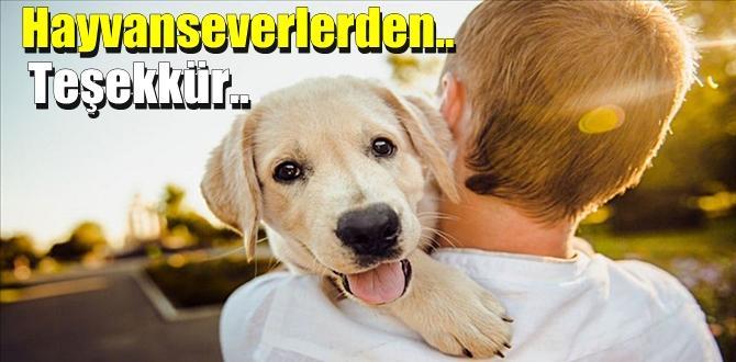 Hayvan Sevenlerden; Sokak Hayvanlarını ilgilendiren Bakanlık genelgesine Teşekkürler..