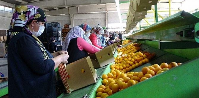 Türkiye Yurtdışına 10 bin ton limon ihracatı yapabilecek!