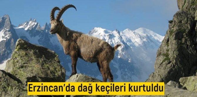 26 Yaban keçisinin avlanması durduruldu, Keçiler Kurtuldu!