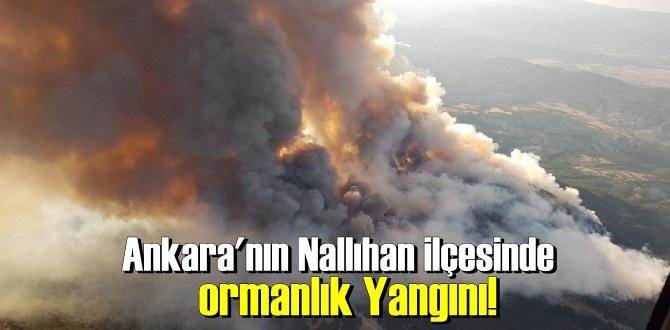 Ankara'nın Nallıhan ilçesinde ormanlık Yangını!