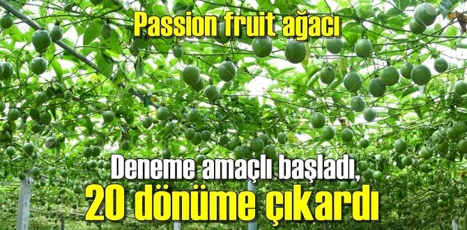 Çarkıfelek meyvesi (Passion fruit) tezgahlarda 7 buçuk TL ile 10 TL arasında alıcı buluyor!