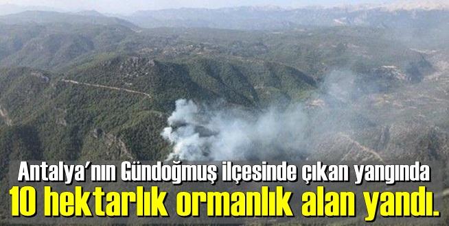 Antalya'nın Gündoğmuş ilçesinde çıkan yangında 10 hektarlık ormanlık alan yandı.