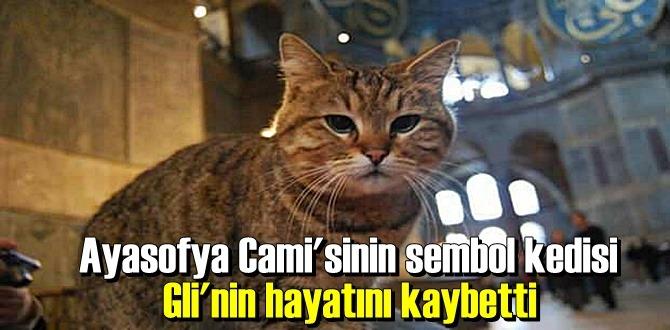 Ayasofya Cami'sinin sevimli sembol kedisi hayatını kaybetti
