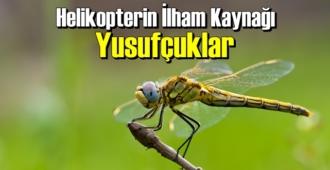 İlginç ama gerçek: Helikopterin İlham Kaynağı Yusufçuklar biliyor musunuz!