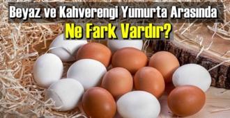 İlginç ama gerçek: Beyaz ve Kahverengi Yumurta Arasında Ne Fark Vardır biliyor musunuz!