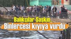 Balıkçılar Şaşkın,Üsküdar'da binlerce denizanası kıyıya vurdu!