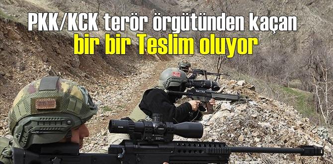 PKK/KCK terör örgütünden kaçan bir bir Teslim oluyor!