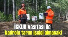 İŞKUR vasıtası ve noter kurası ile kadrolu tarım işçisi alınacak!