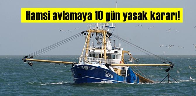 Hamsi avlamaya 10 gün yasak kararı!