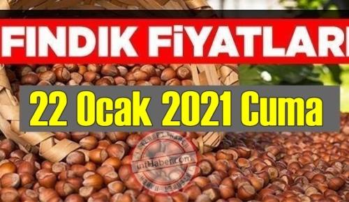 22 Ocak 2021 Cuma Türkiye günlük Fındık fiyatları, Fındık bugüne nasıl başladı