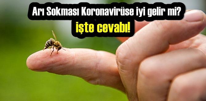 Arı Sokması Koronavirüse iyi gelir mi? işte cevabı!
