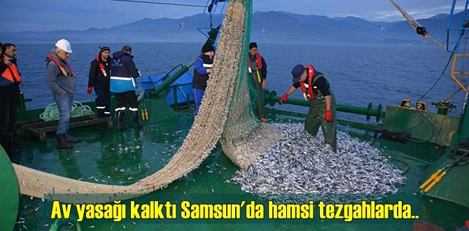 Av yasağı kalktı Samsun'da hamsi tezgahlarda 25 liraya düştü!