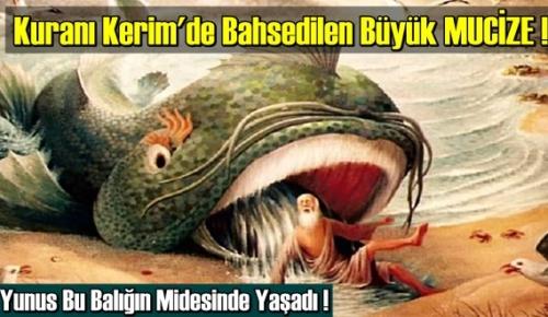 Büyük MUCİZE ! Hz. Yunus Bu Balığın Midesinde Yaşadı !Kuranı Kerim'de Bahsediliyor